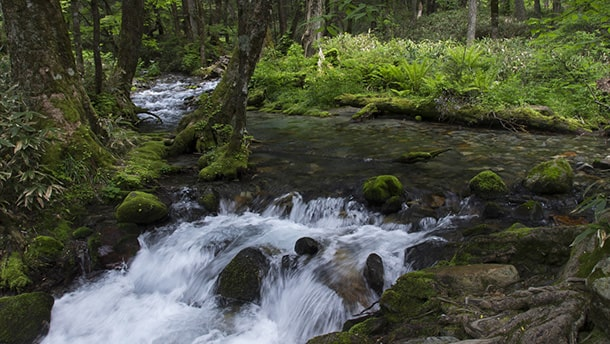 写真:鈴鹿山系の清水