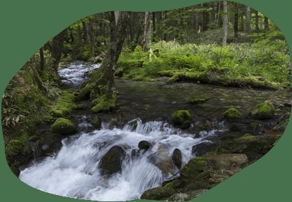 写真:鈴鹿山系の伏流水